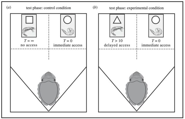 Schematic of the test conditions in the delay maintenance task: (a) control condition, and (b) experimental condition.