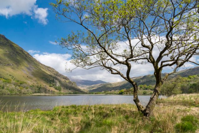 It's a bit too early for photos of Alder Lake-S CPUs, much less Raptor Lake-S—so here's a gorgeous photo of an alder tree on the shore of Llyn Gwynant, in North Wales' Snowdonia National Park.