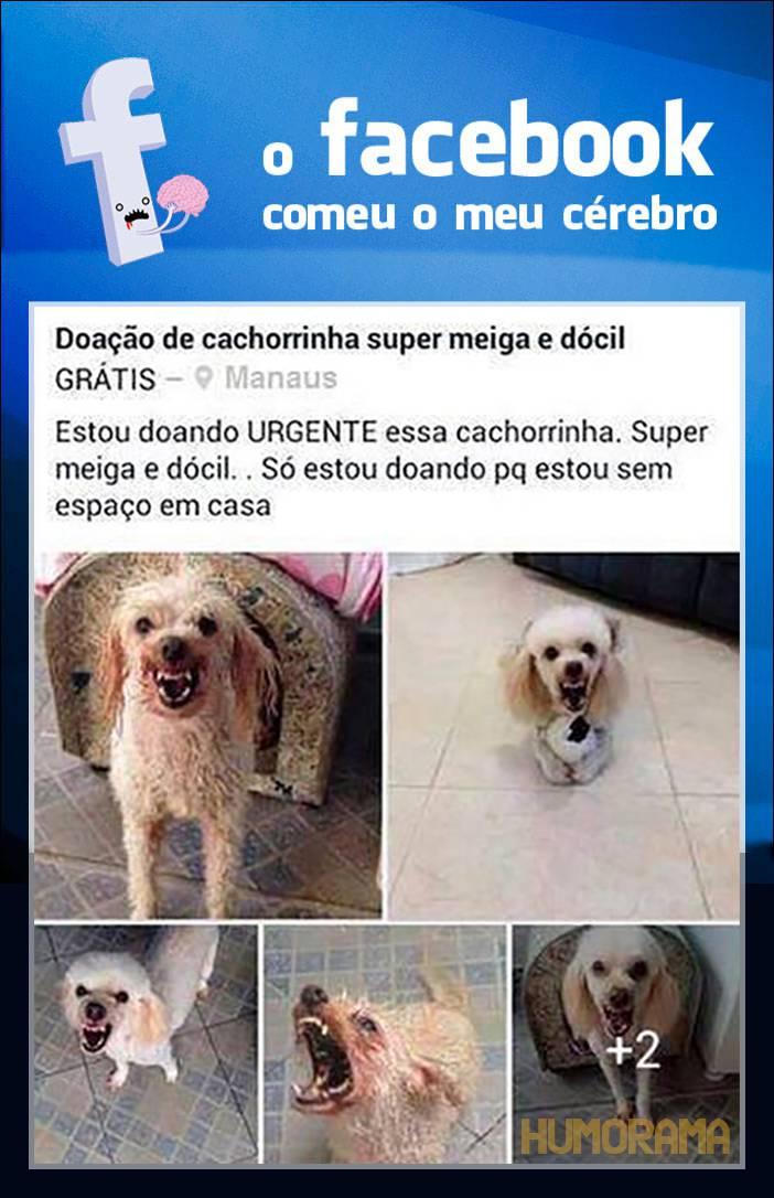 facebook-cerebro (1)