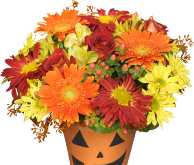 Bloomin Jack O Lantern Halloween Flowers In Greenfield Ma Floral Affairs
