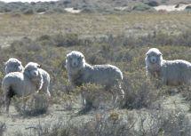Visit Peninsula Valdes Trip Argentina Audley Travel