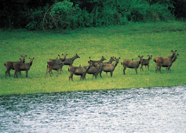 Image result for Nagarhole National Park