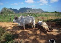 Visit Viales Trip Cuba Audley Travel