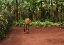 Visit Nyungwe Forest Trip Rwanda Audley Travel