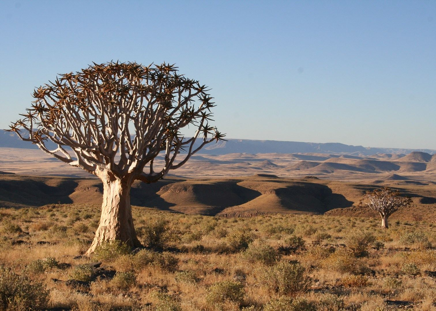 World S Most Unusual Plants And Trees