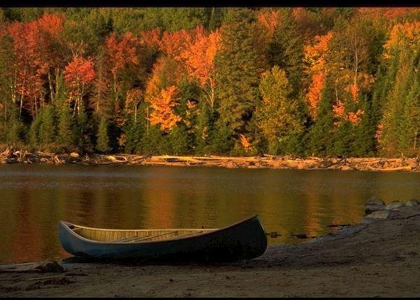 Algonquin Provincial Park Canada Blue Heron