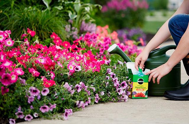 5 Best Plant Food Reviews Of 2021 In The Uk Bestadvisers Co Uk