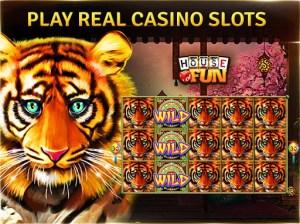 Casino Weaners Day One   Goondiwindi Argus Casino