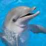 Dolphin Rescues Woman S Iphone Video Bgr