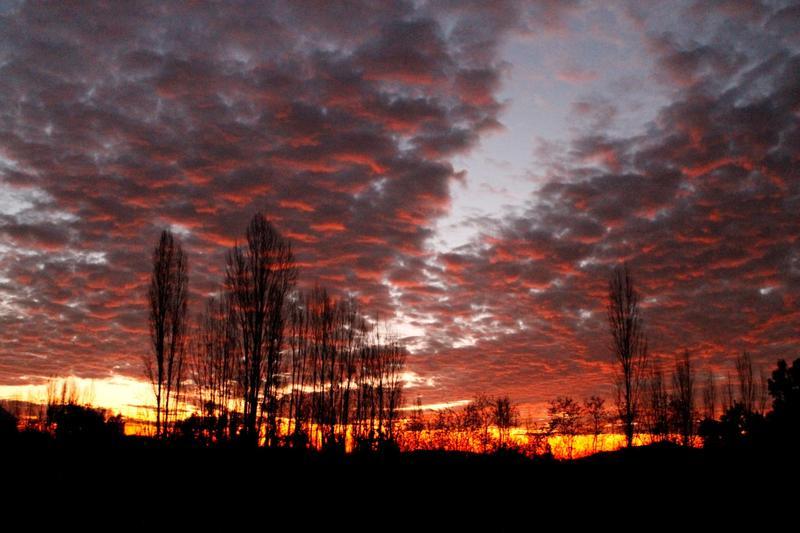 Biodiversidad en Amrica Latina  Chile Compartiendo