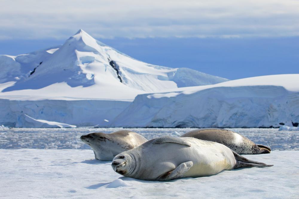 La Antártida experimenta su primera ola de calor jamás registrada ...