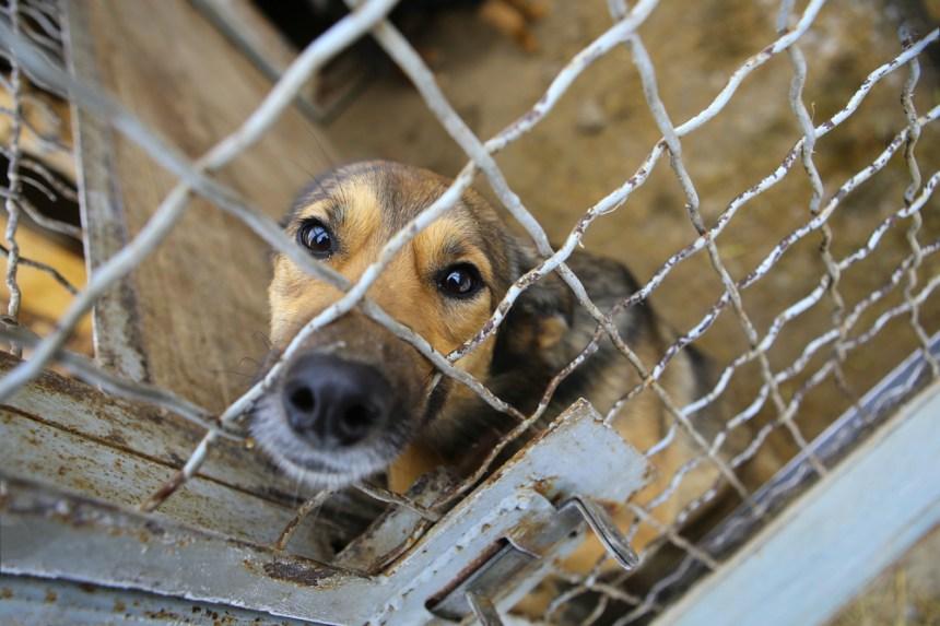 gabbia per crudeltà sugli animali