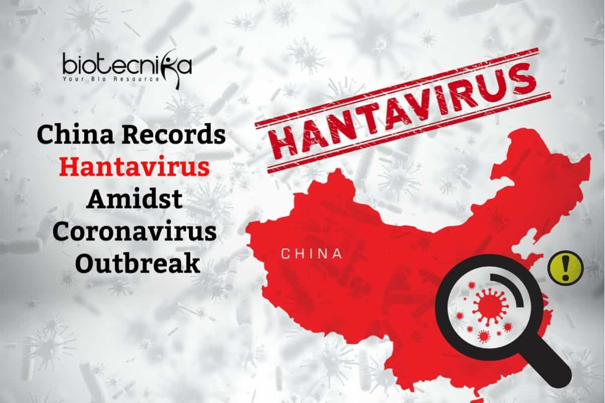 Man Dies From Hantavirus In China Transmitted By Rodents