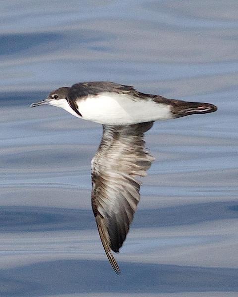 BirdsEye Photography: Review Photos