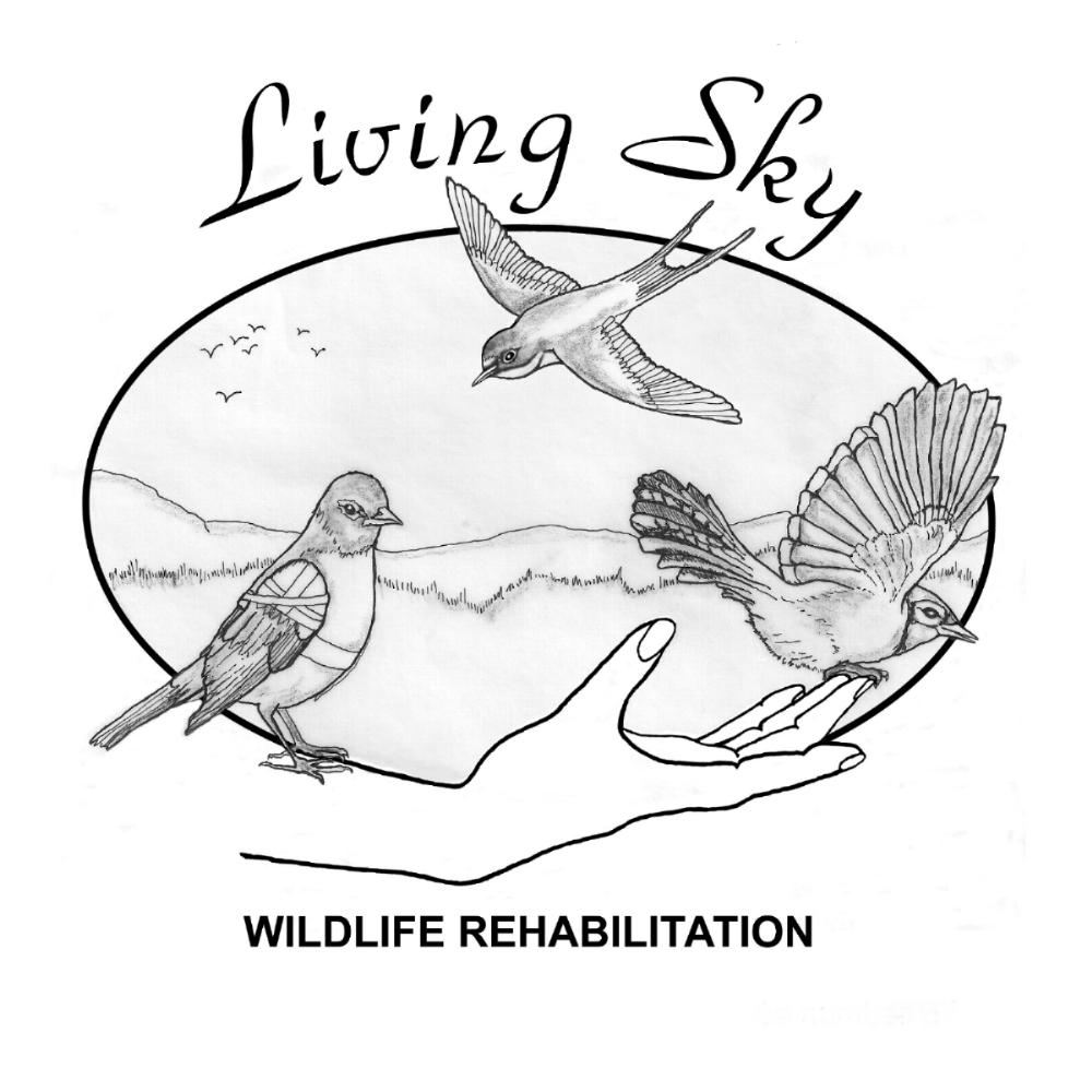 Saskatoon Custom Bird Tours with Living Sky Wildlife