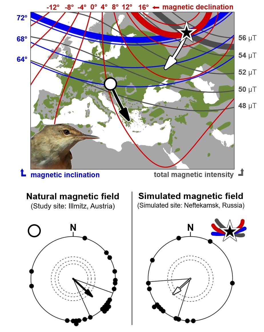 Reed warbler map