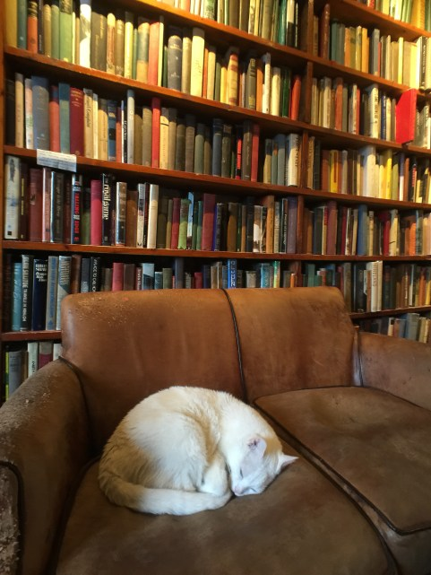 """A cat sleeps on a couch at the Shakespeare and Company bookstore in Paris France. The cat's name is """"Kitty"""" - like all resident cats before it."""