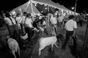 Kauai County Fair 2018 by Peter Adams.