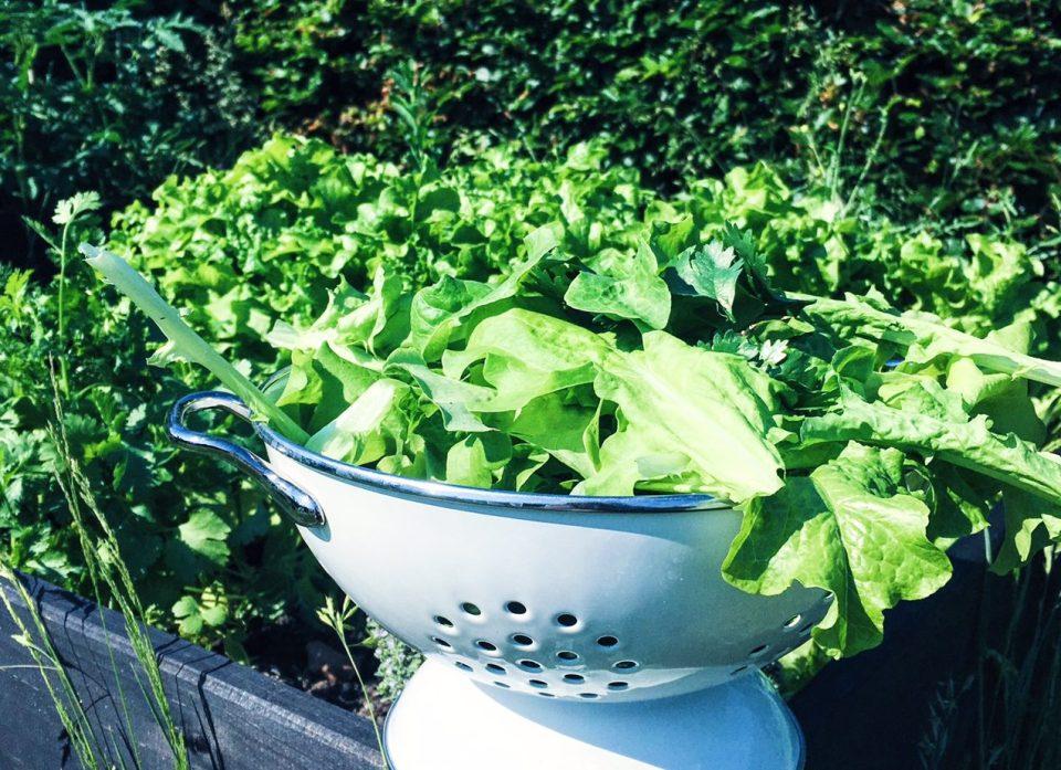 dyrk din egen salat