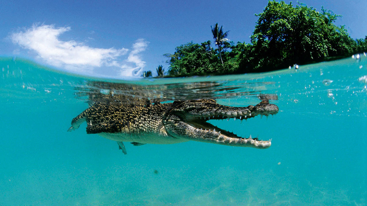Discover Papua New Guinea By Luxury Yacht Boat International