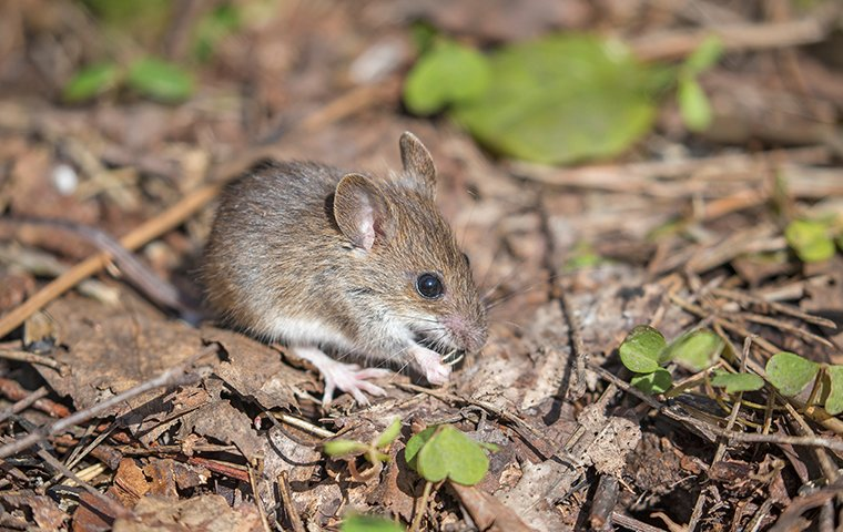 Blog - Who Else In Charlotte Wants To Avoid Rodents?