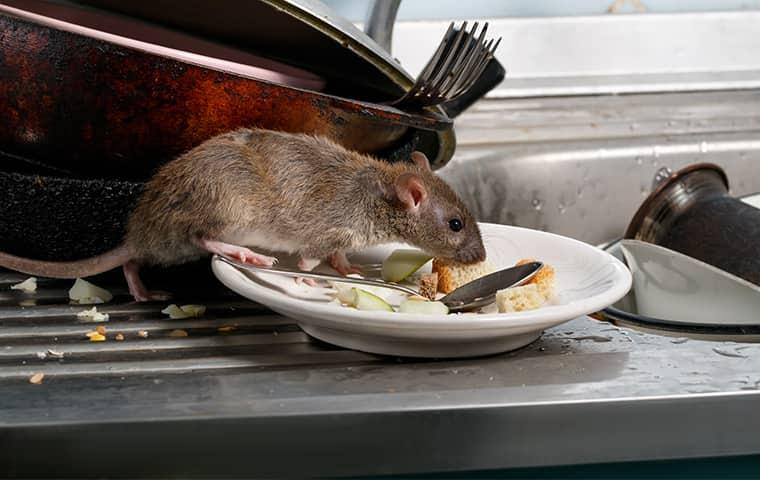 Blog - Things Every Baltimore Homeowner Can Do To Avoid Rodents