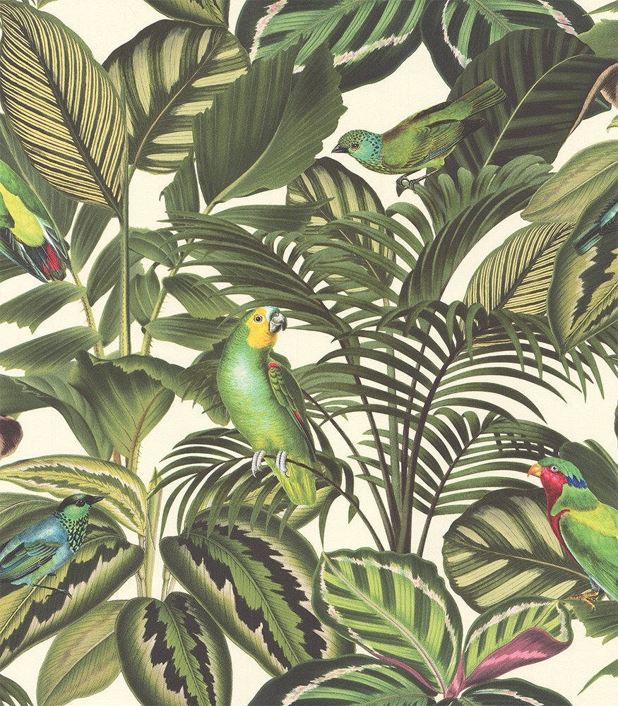 Parrot Jungle Green by Albany  Wallpaper  Brewers Home