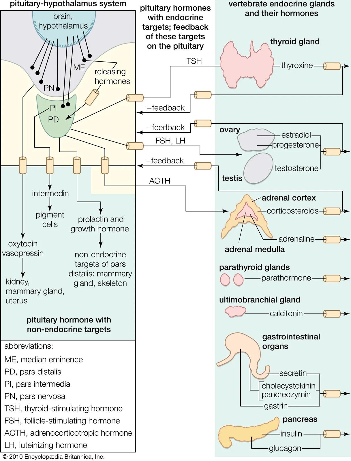 Pituitary Hormones