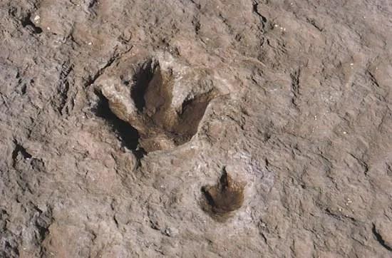 Fossil  paleontology  Britannicacom