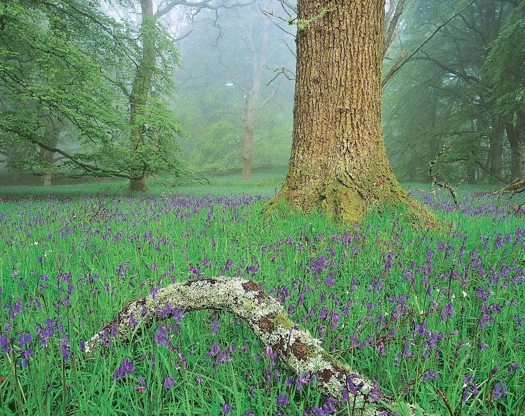 The trees help maintain the water cycle. United Kingdom Plant And Animal Life Britannica