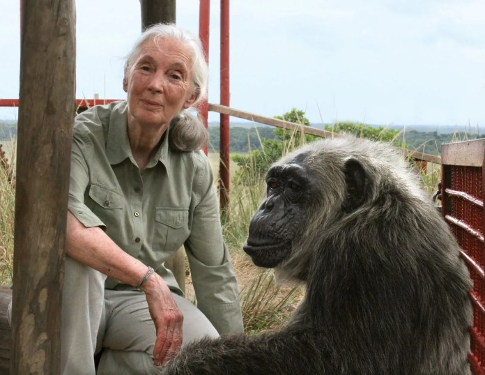 Jane Goodall | Biography, Awards, Books, & Facts | Britannica