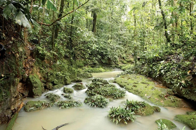 Affinities from those of north. Amazon Rainforest Plants Animals Climate Deforestation Britannica
