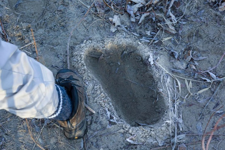 Watch Big Foot (Sasquatch) movie online at Hulu App Cast Characters & Review