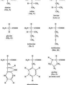 Amino acid definition structure  facts britannica com graphic diagram also wiring name rh  brut creation