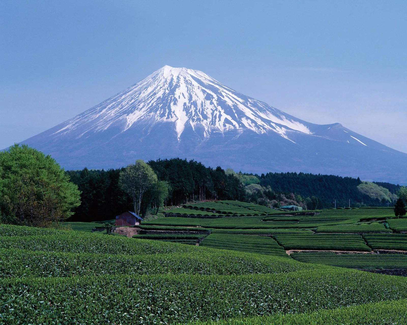 Mount fuji located on the island of honshū, is the highest mountain in japan,. Mount Fuji Facts Height Location Eruptions Britannica