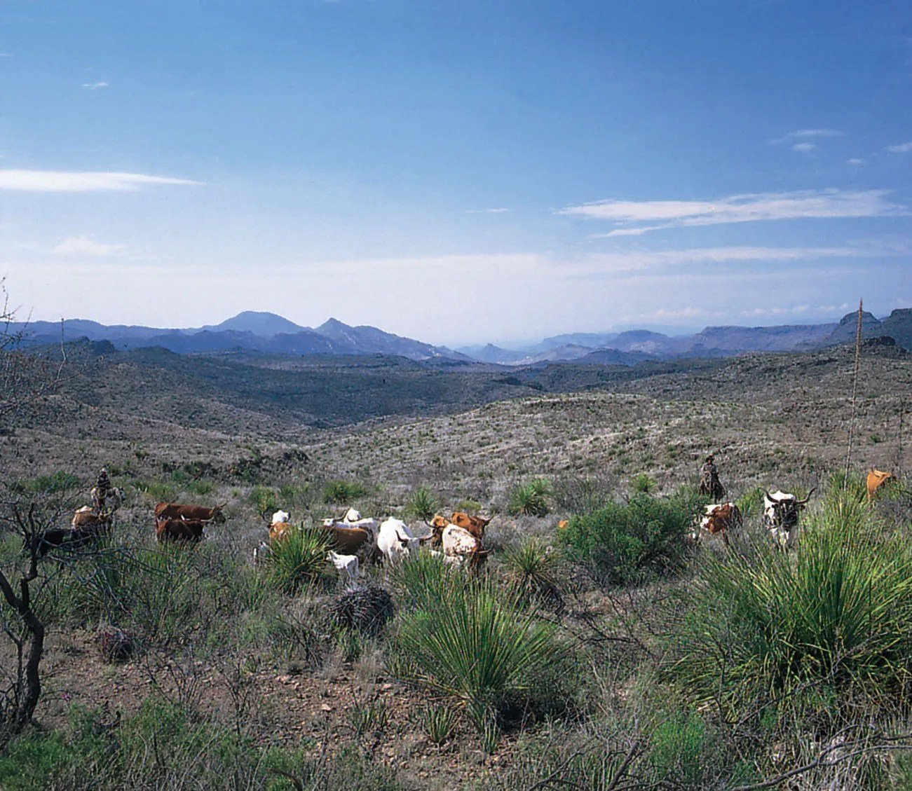 Mountains And Basins Region Of Texas Landforms