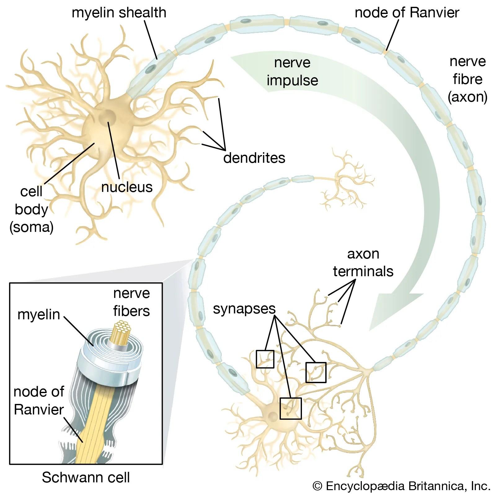 Nervous System Disease