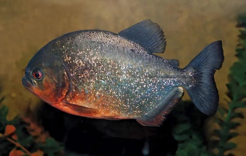 10 of the World's Most Dangerous Fish | Britannica