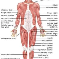 Brain Structures And Functions Diagram Worksheet Onan 4000 Generator Wiring Human Muscle System | Functions, Diagram, & Facts Britannica.com