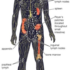 Where Are My Lymph Nodes Diagram Electric Of House Wiring Lymphatic System Structure Function Facts Britannica Com