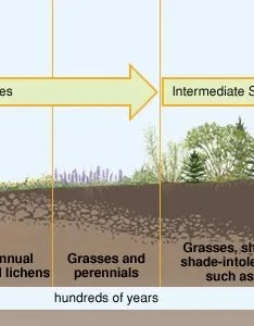also ecological succession definition  facts britannica rh