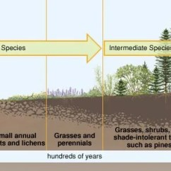 Diagram Of Dune Formation Acura Integra Speaker Wiring Ecological Succession | Definition & Facts Britannica.com