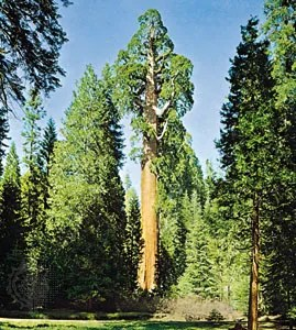 tree structure uses importance