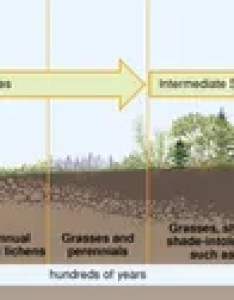 Primary succession also ecological definition  facts britannica rh