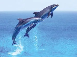 march is dolphin awareness