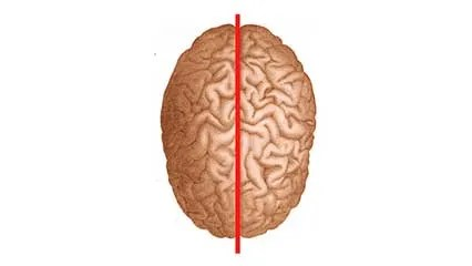 brain diagram pons 2 speed fan wiring definition parts functions facts britannica com split syndrome
