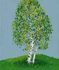birch tree britannica com