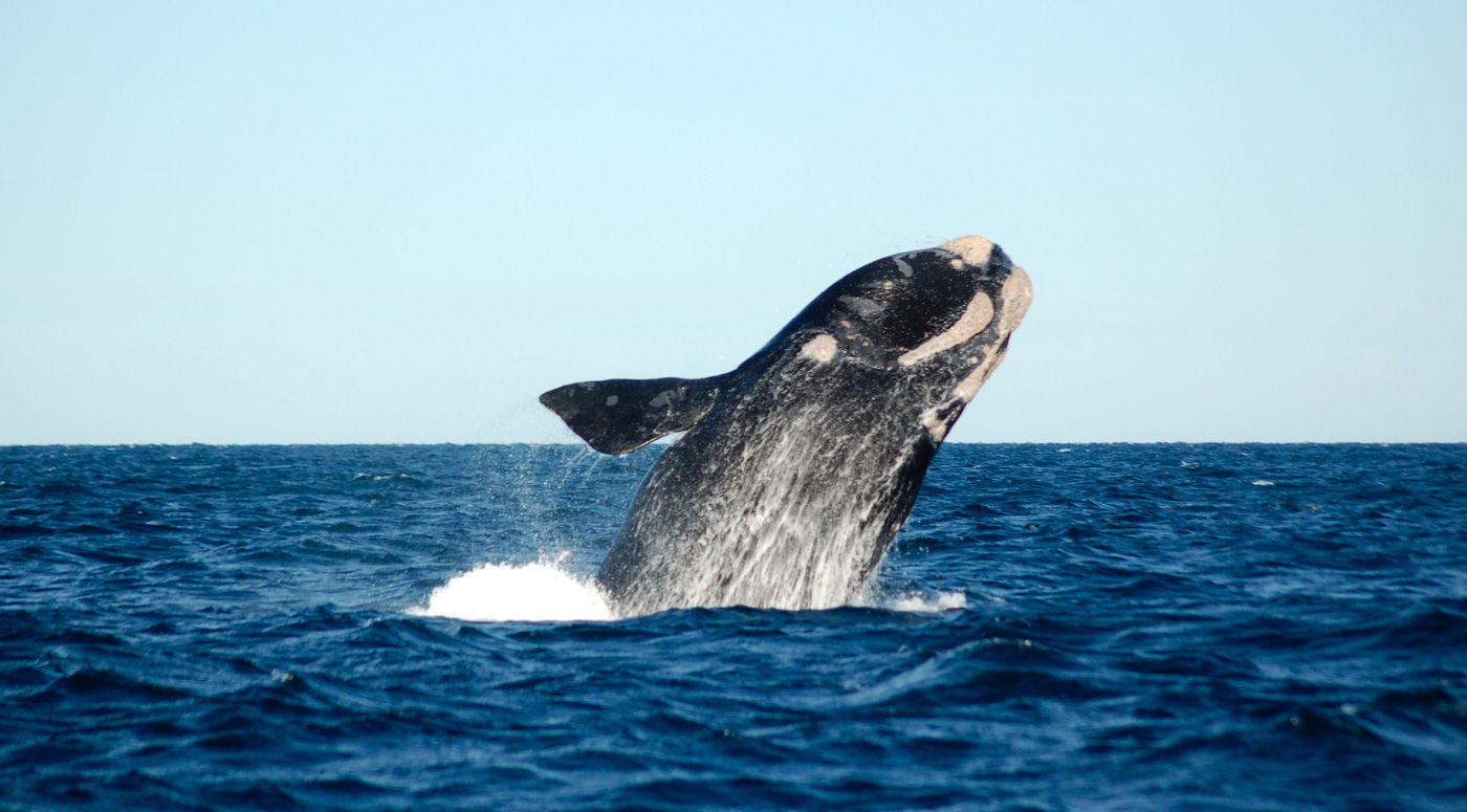 Puerto Madryn Travel Costs  Prices  Peninsula Valdes Whale Watching  BudgetYourTripcom