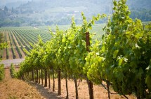 Napa Valley Travel Costs & - Wine Country Winery