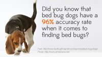 How Do Bed Bug Dogs Detect Bed Bugs?